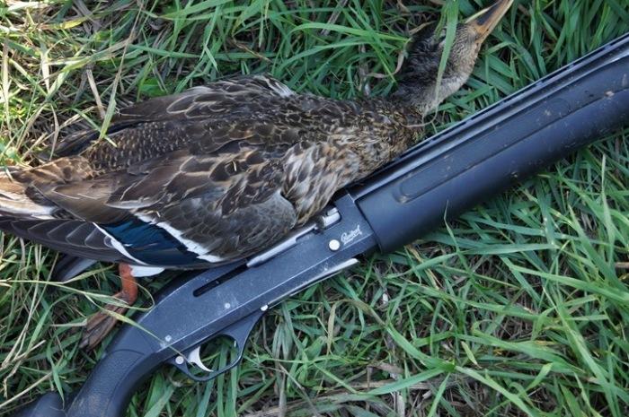 Ружье и птица
