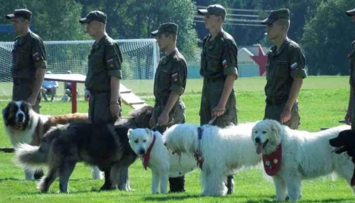 Учения с собаками